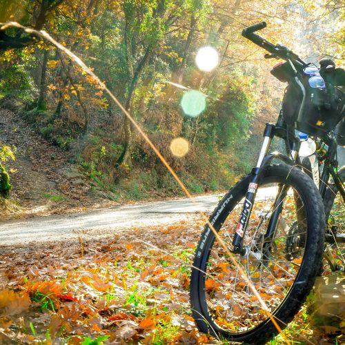 cycling-2846201_1920